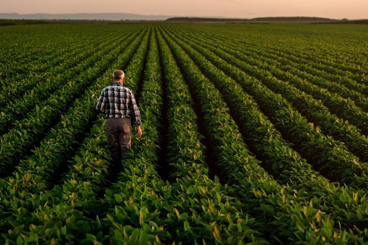 sanidad-vegetal-agricultura-aepla